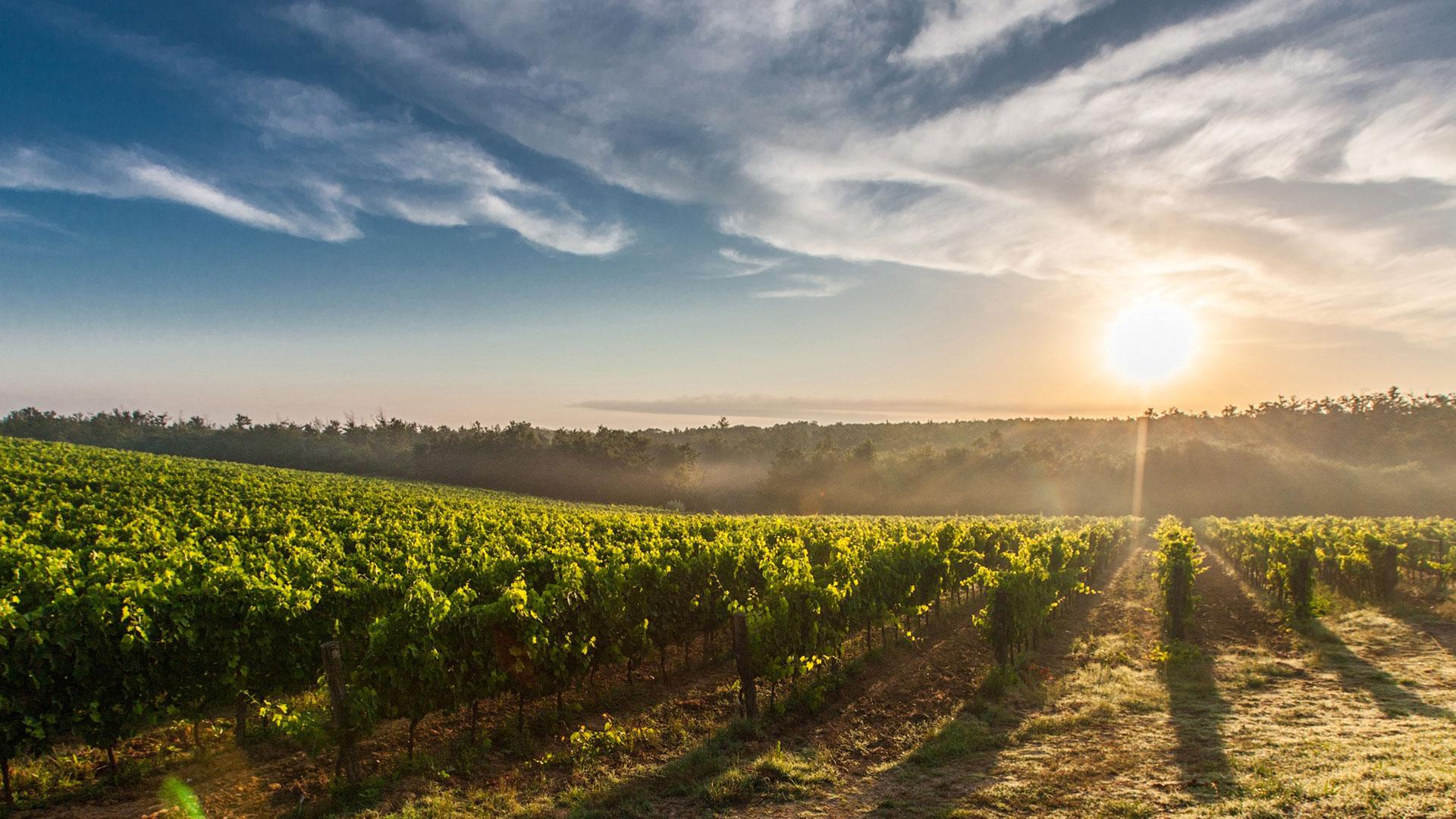 Longhouse Wines, Pokolbin, Hunter Valley
